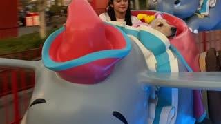 Riley the Service Dog Enjoys Amusement Park Ride