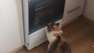 cat asks to eat