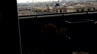 Paris to day