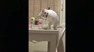 watch these cats go crazy, funny