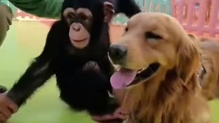 👍 Best Funny Dogs 🐶 Ep06