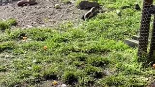 Puppy takes a dive