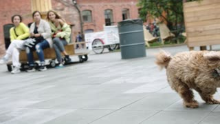 a puppy running