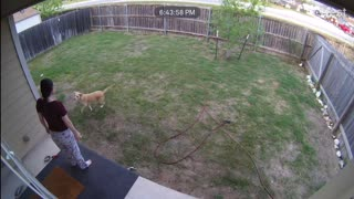 Doggy Plays Catch With Itself