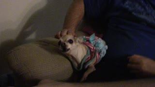 Chica the Wonder Dog