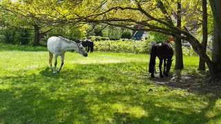 Watch these beautiful horses graze in the sunshine