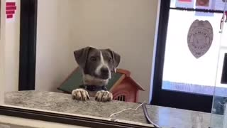 Happy Dog is Excited for Adoption
