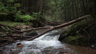 Fallen Log Waterfall Nature Ambience - 1hr Scenic Video