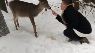 Deer Tries to Pet Person Back