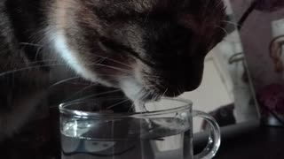 Drinking cat slowmotion