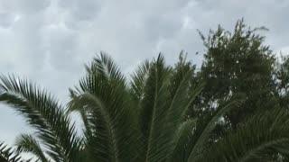 Mesmerizing Mammatocumulus Cloud Formation Fills Sky