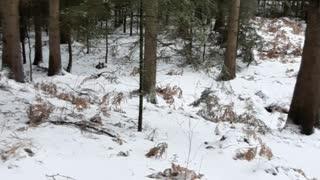 Walking through the Dalheimer forest