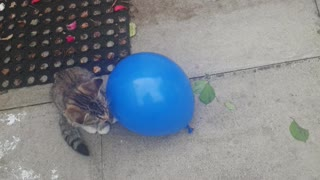 Cats Uninterested of Blue Balloon