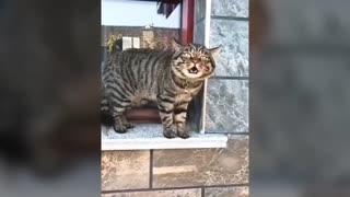 Talking Cat #1
