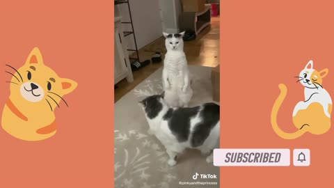 Funniest Animals - Best Of The 2021 Funny Animal