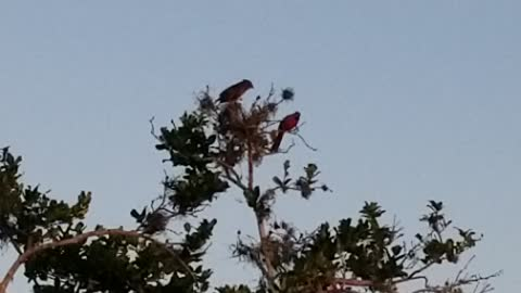 Cardinals in tree
