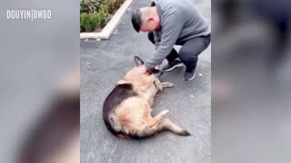 Former Police Dog Cries After Reuniting With Handler