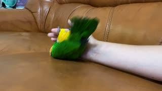 Playful Bird Dodging Blaster