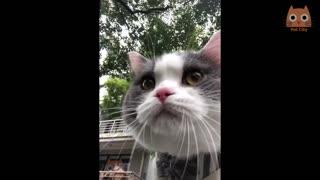 funny animal video cute