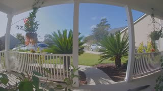 Alligator Wanders onto Woman's Front Porch
