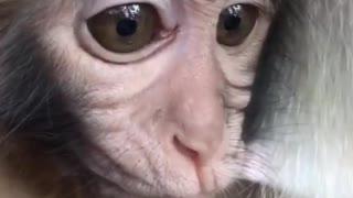 The cute little monkey