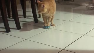 Hungry Kitty Drags Cat Food Tin to His Bowl