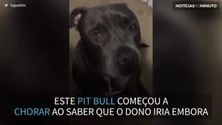 Cão chora quando o dono vai para as aulas
