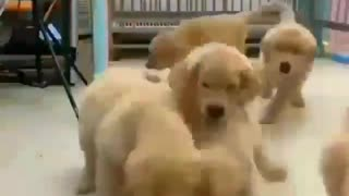 Adorably mother dog who loves her child very much