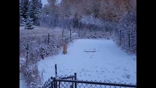 Jeannie Discovers Snow