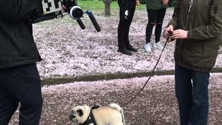 Camera Shy Doggo