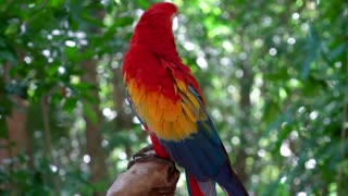 Wonderful colorful birds and soothing piano music for relaxation