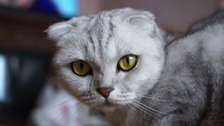 Animals cat sad cute 4k videos