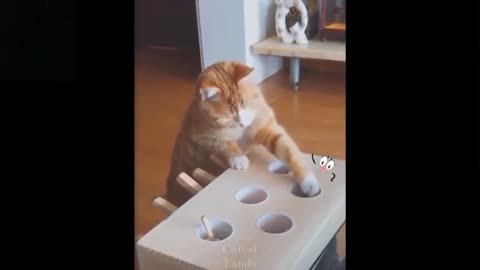 👌Cute and funny animals Compilation video