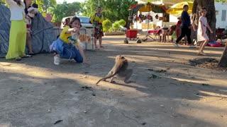 Pranking monkey with fake tiger (Hilarious reaction)