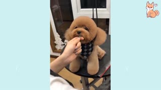 Cute Puppies and Dog Compilation