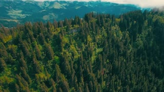 Drone shoted forest Stock Video Roylity Free [NCVHD]