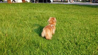 #Dog_ playing