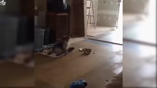 Funny Animal videos that will make you laugh!