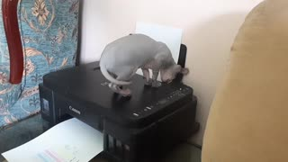 The cat named Patisson is examining the printer.