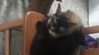 Cat Drinking Milk From dog