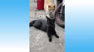 Cute Pets And Funny Animals Compilation #56 - Pets Garden