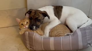 Puppy and kitten cuddling together will make your day