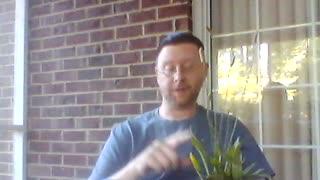 Lesson 15: Plantain