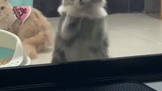 Kitty Gives Window A Paw Combo