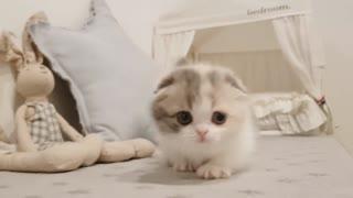 Cute little cat 00