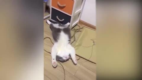 Kitten cat funny video