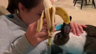 Bunny eating banana