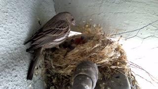 bird feeding and cleaning - bird feeding hygiene - keeping your bird feeders clean
