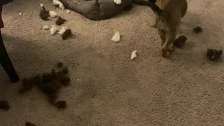Puppies destroyed one of their beds