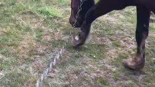 Horse on a walk